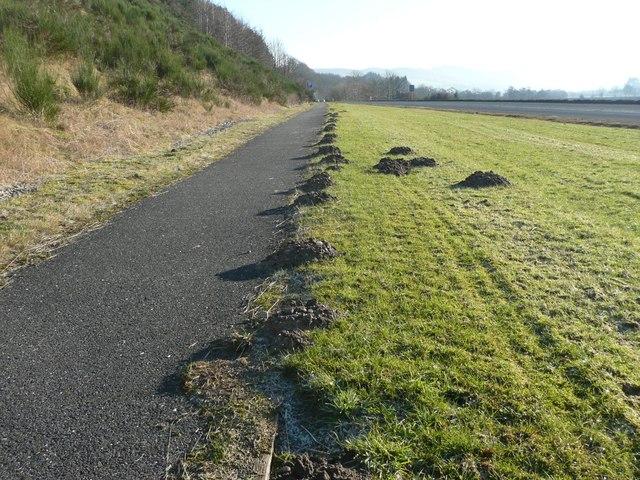Moles seem to like cycle tracks
