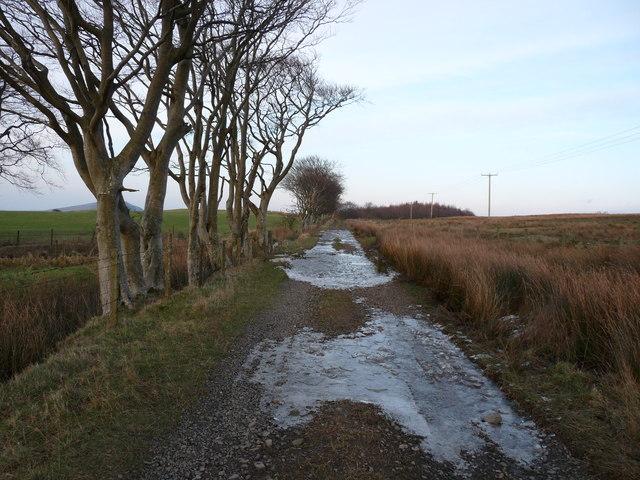 Auchencrosh Trail