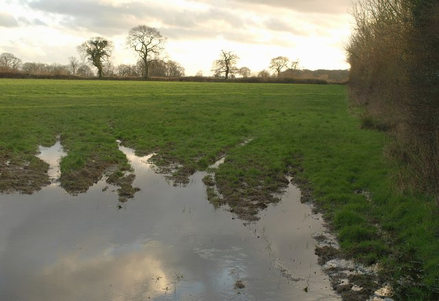 Wet field by the lane to Jack's House