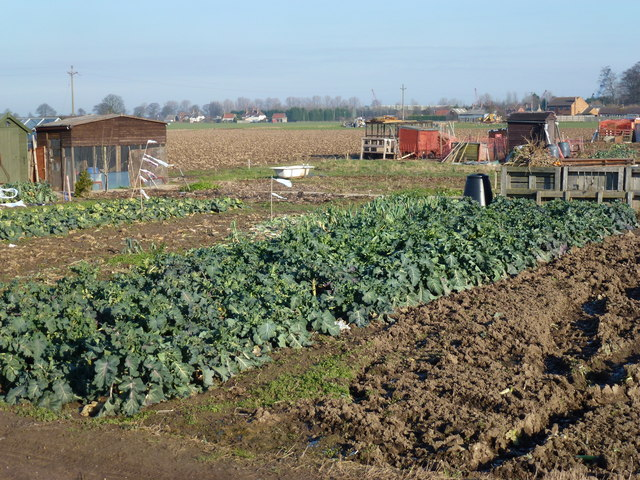 Allotments in Sutton Bridge