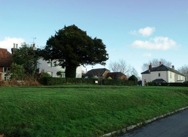 More greenery in Rushlake Green