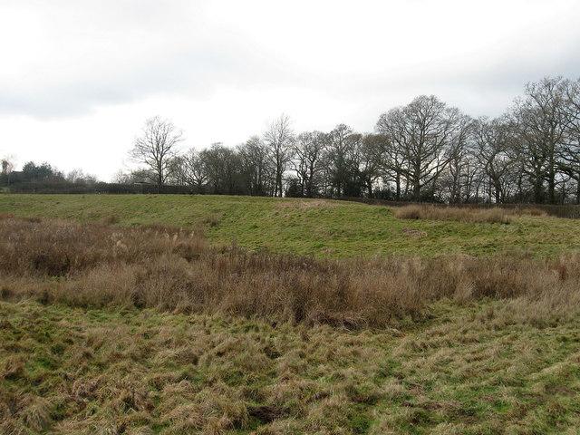 Brook Field