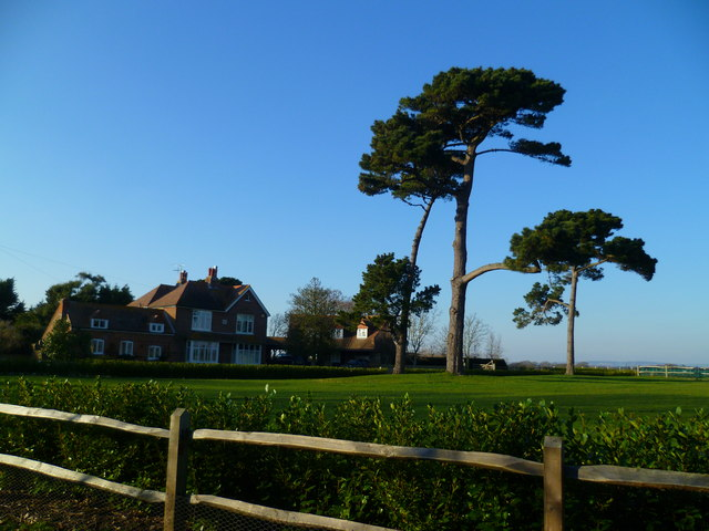 Scots pines by the footpath at Church Norton