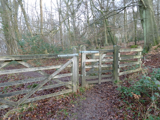 On the path from Selborne Hanger to Coneycroft Hill (f)
