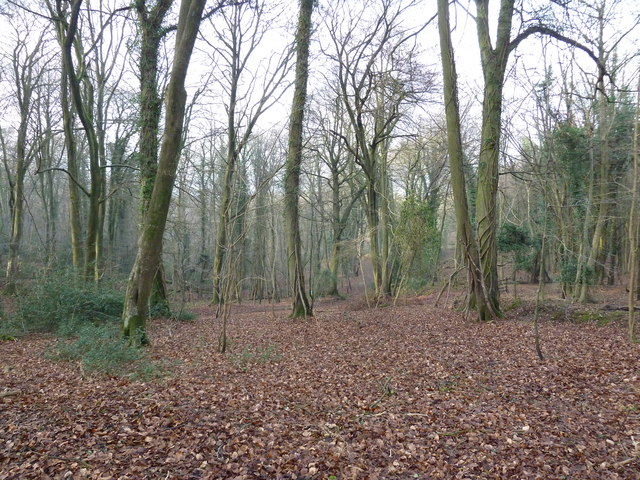On the path from Selborne Hanger to Coneycroft Hill (h)