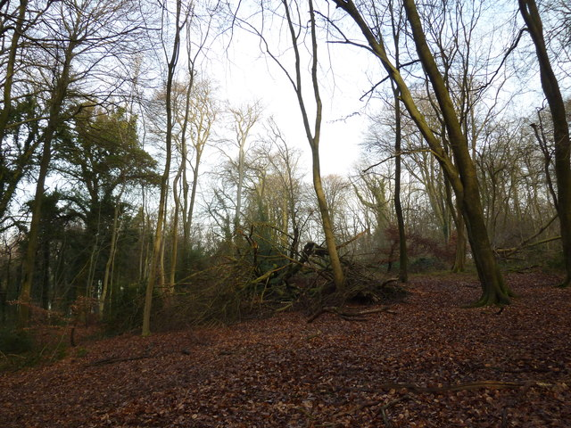 On the path from Selborne Hanger to Coneycroft Hill (e)