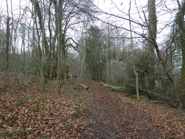 On the path from Selborne Hanger to Coneycroft Hill (i)