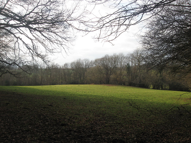 Mill Meadow