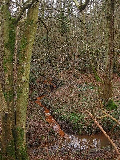 Stream, Powdering Tub Wood