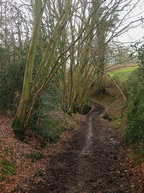 Bridleway, Powdering Tub Wood