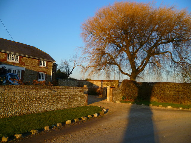 Tree at bend on Bowley Lane