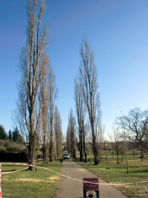 Poplars Down in Oakwood Park, London N14