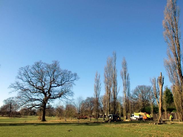 Felling of Poplar Trees, Oakwood Park, London N14