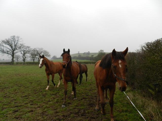 Horses in field, near Hanbury