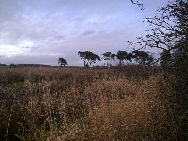 View East towards Prestwick Carrs