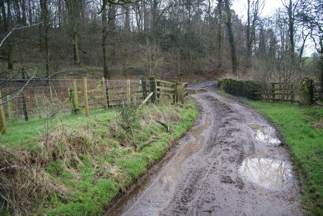 Ingthorpe Lane nearing Brows Plantation