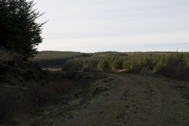 The track through Cornabus Forest, Islay