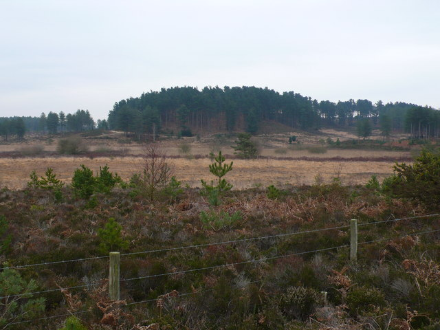 Great Ovens Hill, Wareham Forest