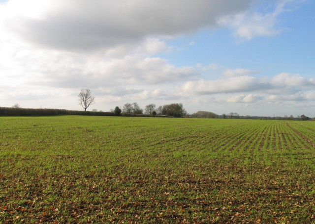 Fields west of Ashby Road