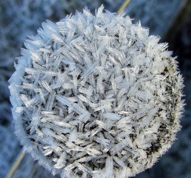 Frost Clad Fungi