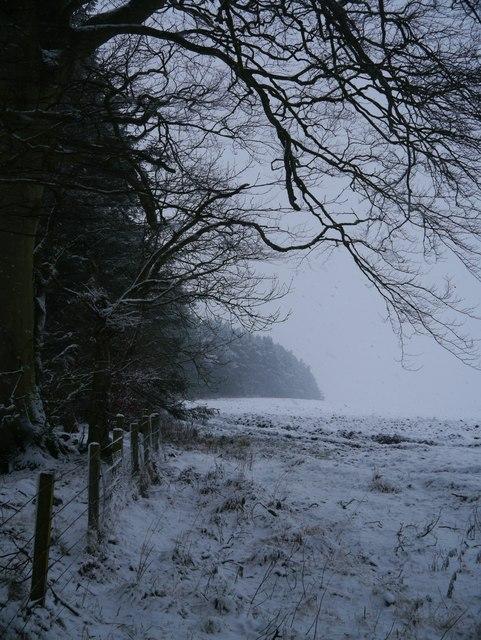 Towards Foulshotlaw Plantation