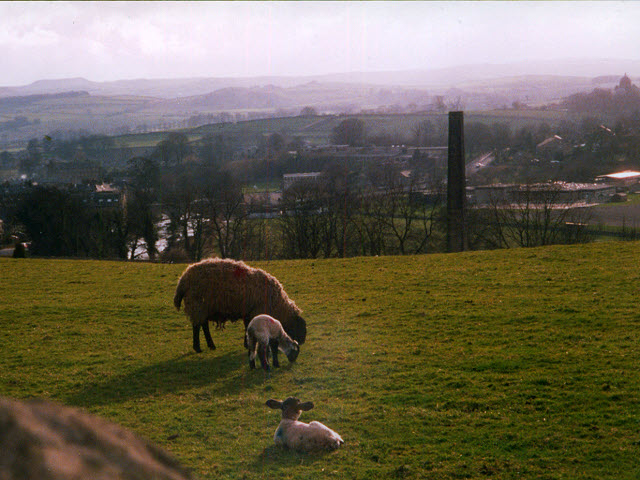 Sheep above Settle