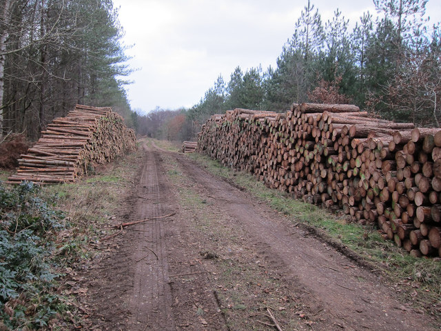Logs ready for collection