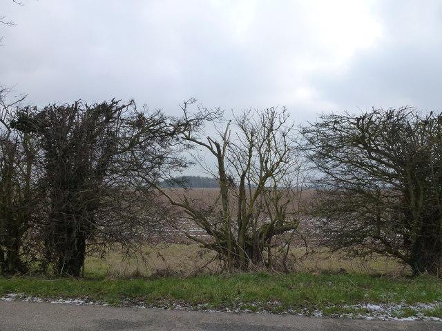 Gedney Marsh through a gap in the hedge