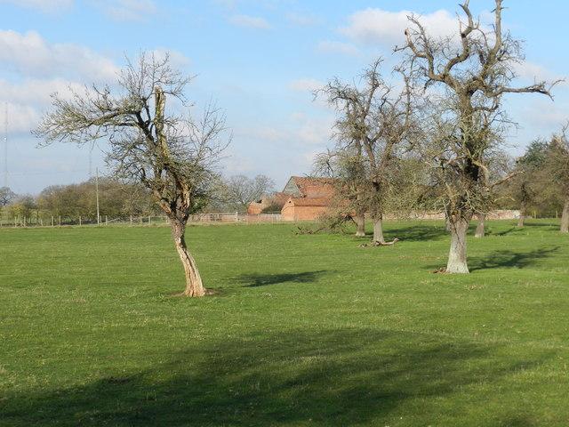 Old orchard, Sagebury Farm
