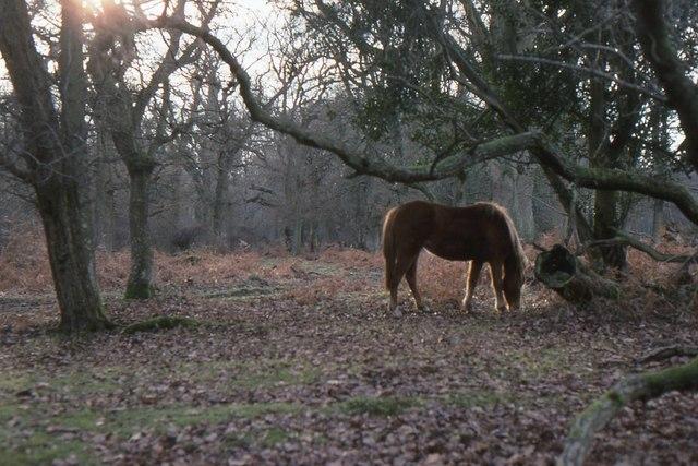 New Forest: woodland at Pigbush
