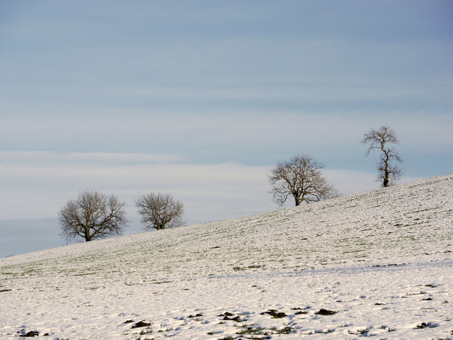 Snowed field with trees