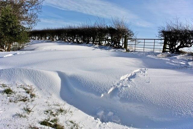 Almost Virgin Snow, Goosecroft Lane