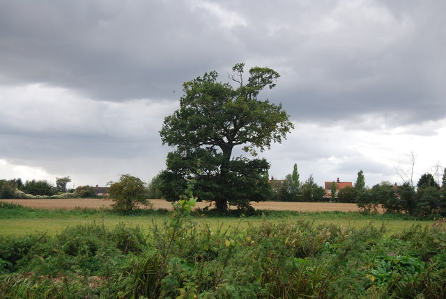 Tree on the Gipping floodplain