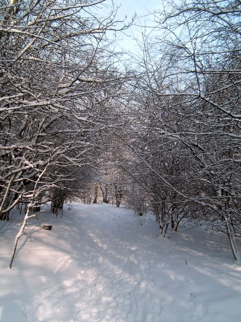 Woodland snowscape