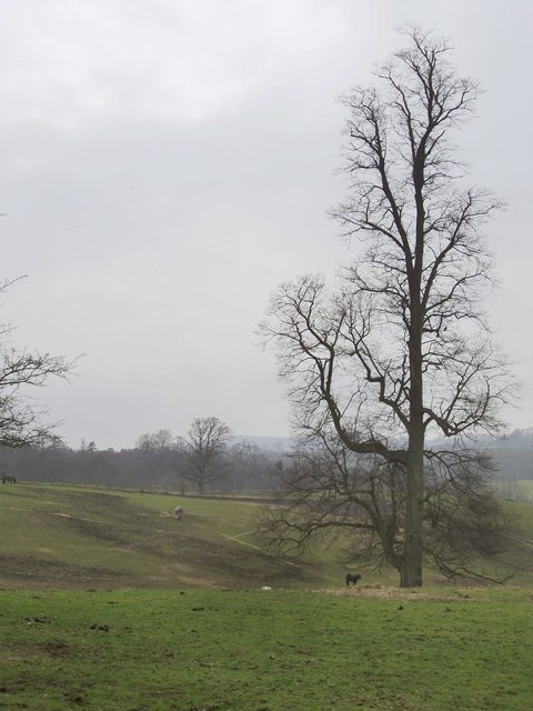 Downland pasture south of Tandridge Priory