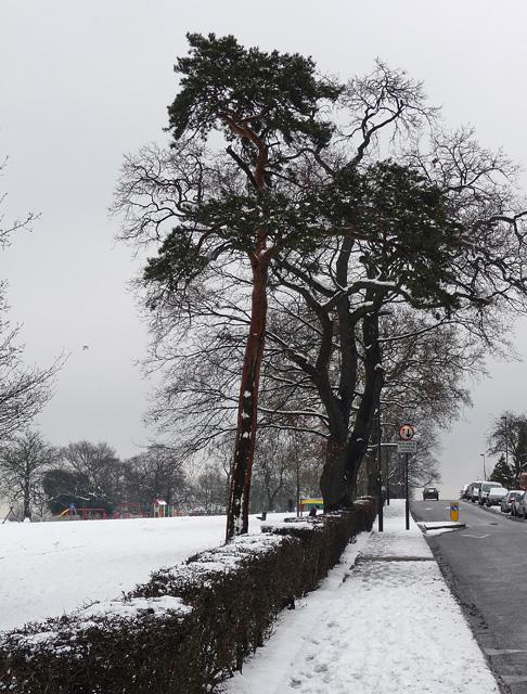 Norwood Park (10)