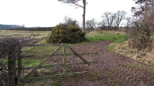 A small wood near Merryhatton