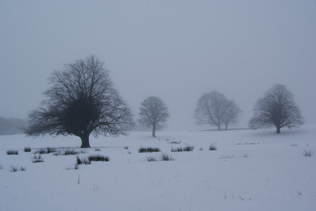 Wintry trees above Holcombe Brook