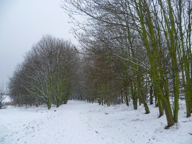 Route of the Green Chain Walk through East Wickham Open Space after snow