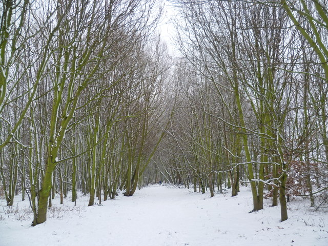 East Wickham Open Space after snow