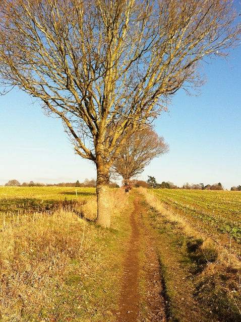 Bridleway from Long Common to Plonk's Hill