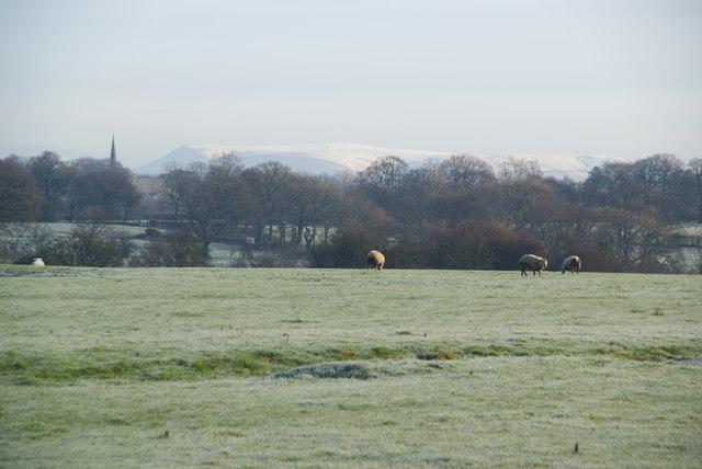 Frosty fields near Balderstone