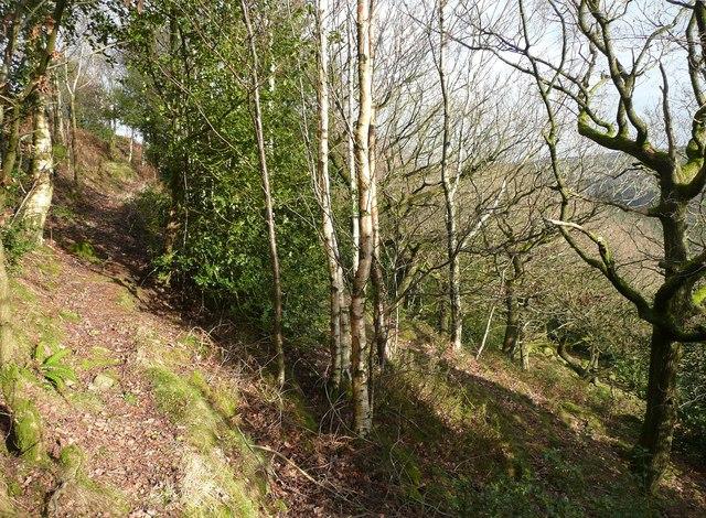 Footpath in Sandy Pickle Wood