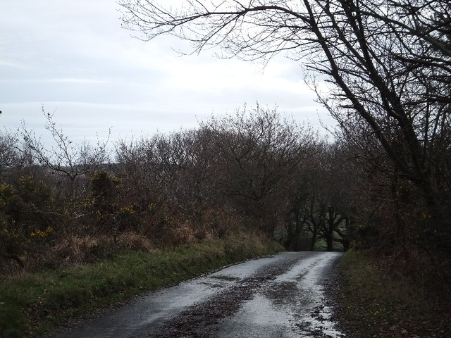 The edge of Haldon Forest at Rixford
