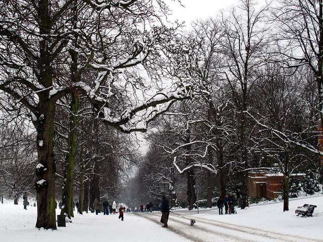 The Avenue in the snow
