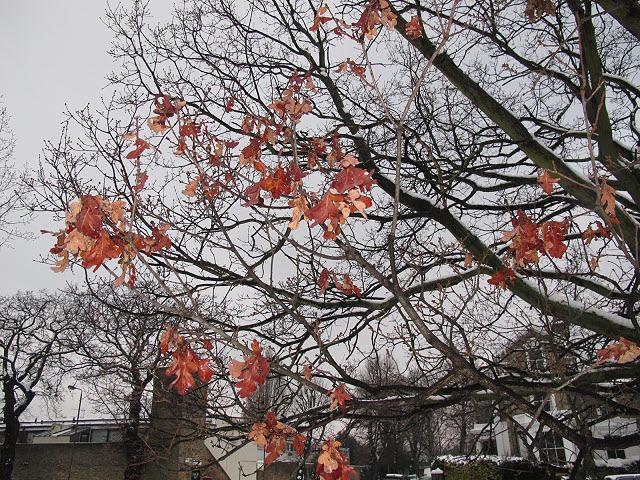 Last leaves on the tree