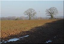 ST0307 : Trees across a field, Stoneyford by Derek Harper