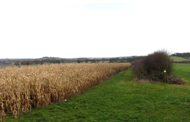 Fields by Wire Lane