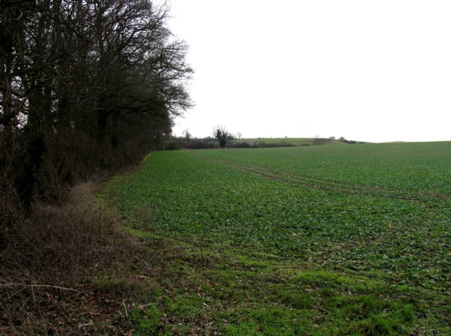 Field by Wire Lane Spinney