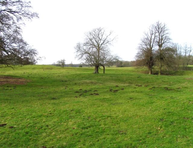 Grass trees and molehills